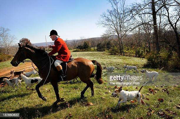 Dennis Downing Huntsman for the Blue Ridge Hunt is surrounded by foxhounds while on the chase during a fox hunt in Millwood VA within Clarke County...