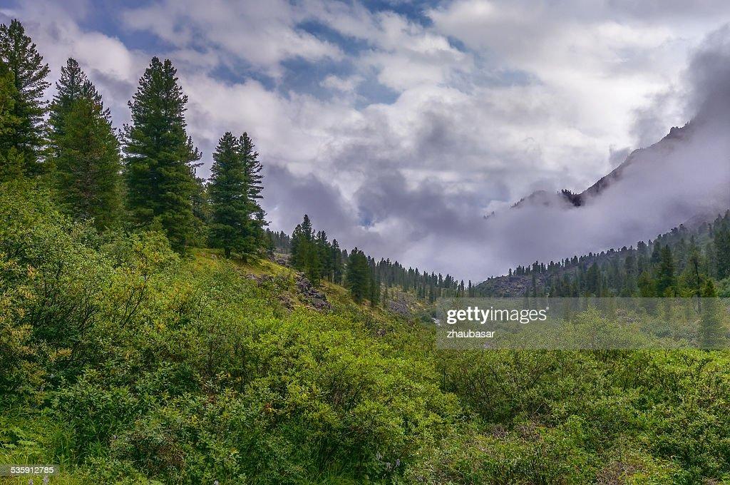 Dense bushland in a mountain valley : Stock Photo