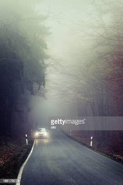 Brouillard épais sur la route forestière, oncoming feu