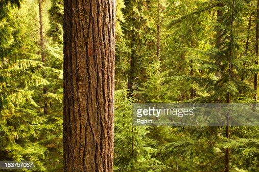 Dense forest woods