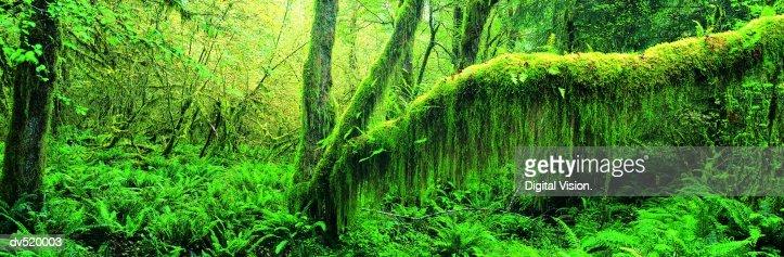 Dense Rainforest : Stock Photo