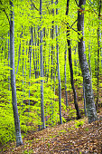 Dense trees in a lush green forest in spring