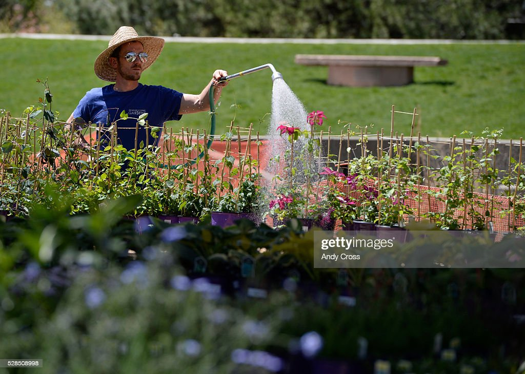 Denver Botanic Gardens seasonal horticulturist Monty Puzey waters plants and flowers in preparation for the annual spring plant sale May 05, 2016. The public plant sale, which features veggies, annuals, perennials and many other plants and flowers is free to the public (plant sale and Gardens admission) and runs Friday and Saturday from 8 a.m to 5 p.m.