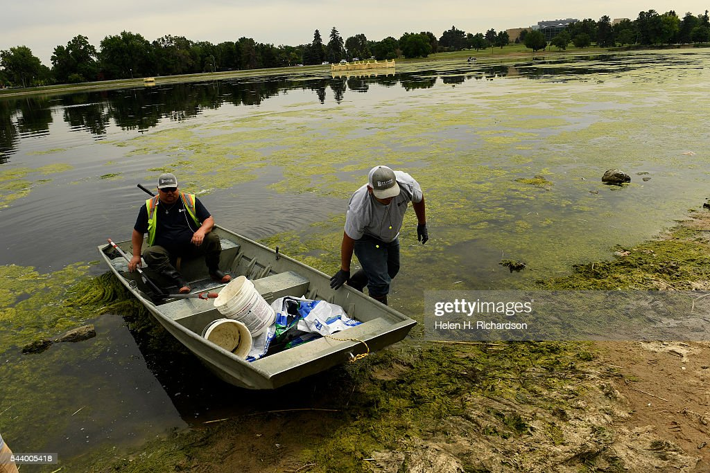 Denver Parks and Recreation workers Bridger Hardy, left, and Tim Lopez, right, return to land after having applied an algaecide in to the water that they hand sprinkled on Ferril Lake at City Park on June 30, 2016 in Denver, Colorado. Denver Parks and Recreation is trying to take care of a huge algal bloom that has taken over the lake and shut down the boating on the lake. The department is using an algaecide that they are sprinkling by hand into the water as well as rakes to try to pull the long algae out of the water.