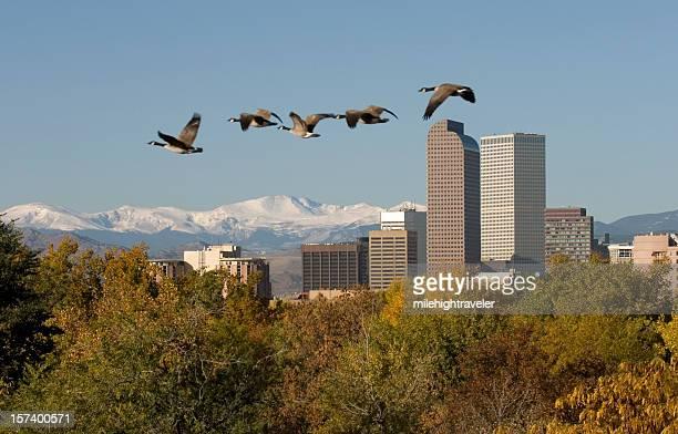 Denver Skyline and fall colors