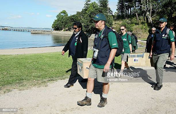 Department of Conservation staff carry ten little spotted kiwi in boxes ready for release on Motuihe Island a conservation pestfree island close to...