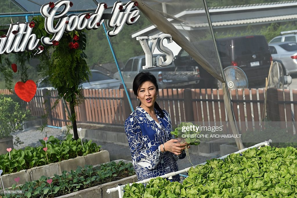 Deposed Thai Prime Minister Yingluck Shinawatra holds a lettuce as she gives a tour of her vegetable garden to mainly foreign media who were invited at her compound in Bangkok on February 12, 2016. Barred from discussing politics by the Thai junta, ousted Prime Minister Yingluck Shinawatra opened up her Bangkok home on February 12 to talk about her new passion: vegetables. AFP PHOTO / Christophe ARCHAMBAULT / AFP / CHRISTOPHE ARCHAMBAULT