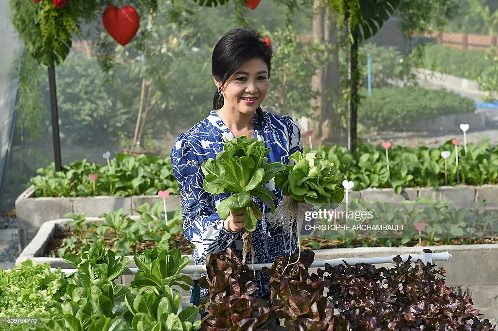 Deposed Thai Prime Minister Yingluck Shinawatra holds lettuce as she gives a tour of her vegetable garden to mainly foreign media who were invited at her compound in Bangkok on February 12, 2016. Barred from discussing politics by the Thai junta, ousted Prime Minister Yingluck Shinawatra opened up her Bangkok home on February 12 to talk about her new passion: vegetables. AFP PHOTO / Christophe ARCHAMBAULT / AFP / CHRISTOPHE ARCHAMBAULT