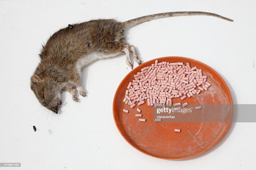Крысы отрава своими руками 78