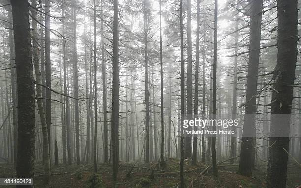 The woods along the Appalachian Trail fill with morning fog Wednesday July 11 on Chairback Mountain located in Maine's 100mile wilderness area