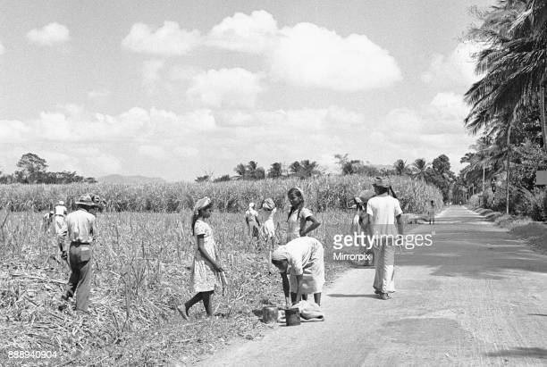 Descendants of indentured East Indian labourers working in the sugar cane fields in Trinidad Circa December 1946