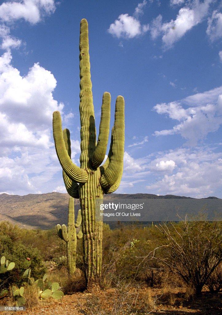 Desert cactus blue clouds in sky
