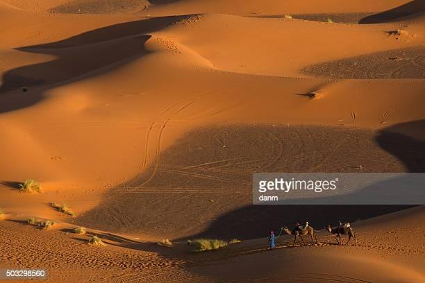 Desert camel caravan with berber in front of caravan