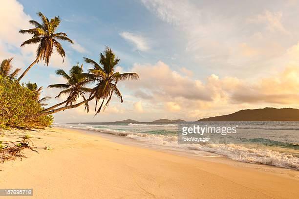Desert island sunrise idyllic palm trees golden sand tropical beach