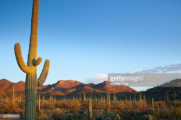 Desert landscape filled with cactuses in the sun