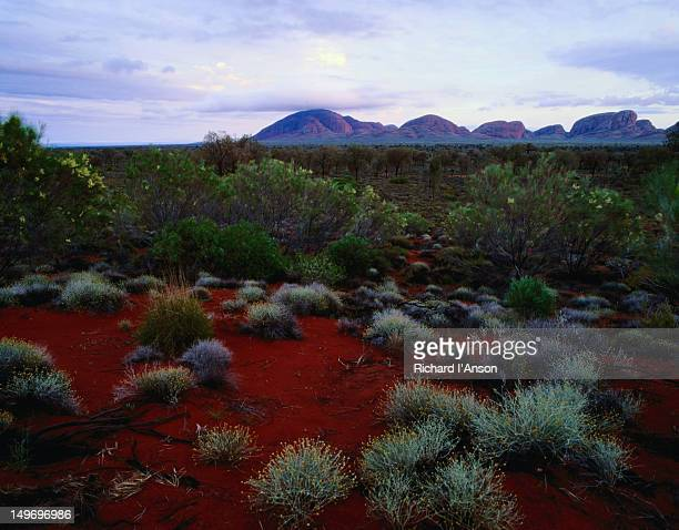Desert plants with Kata Tjuta (Olgas) in distance.