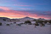 Desert Sand Dunes and Cactus Landscape at Sunset and Sunrise