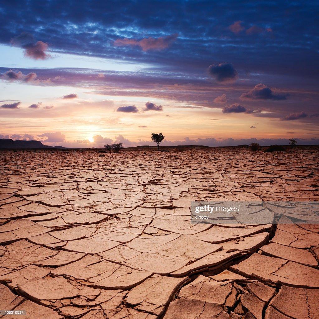 Desert Sun : Stock Photo