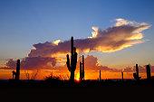 Desert Sunset-Tonto National Forest. McDowell Sonoran Preserve, Scottsdale Az. RZXT3533