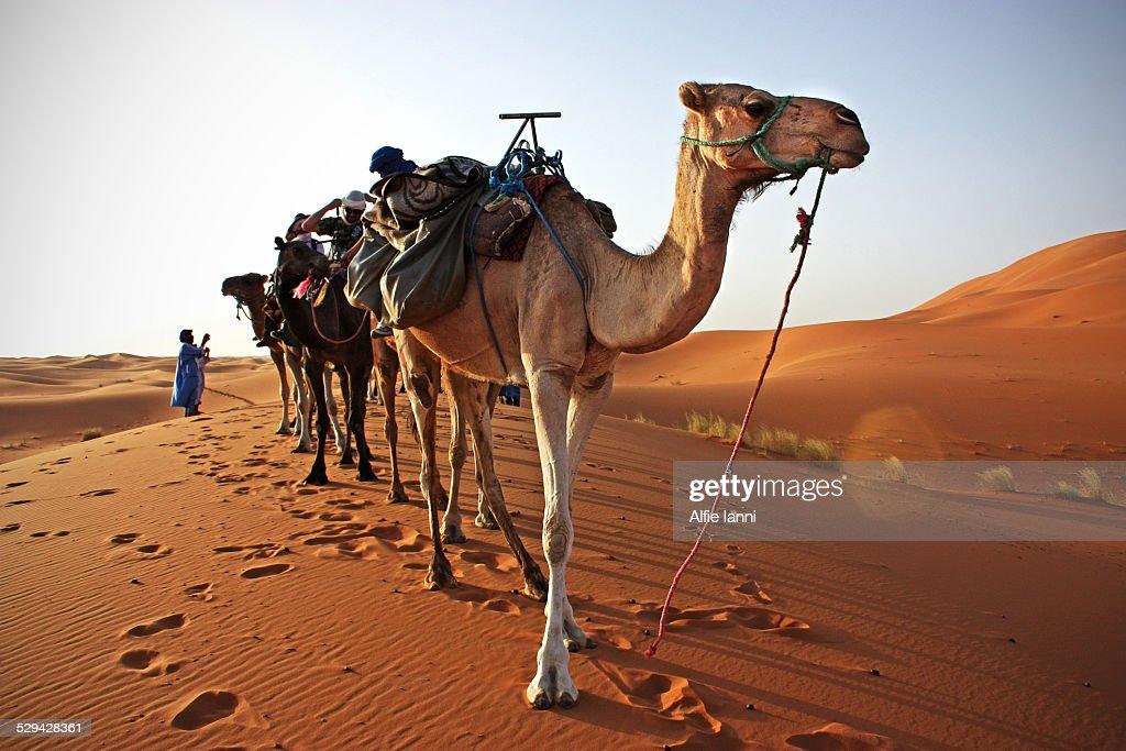 Desert Tour : Stock Photo