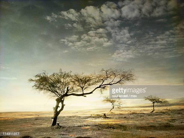 Desert with tree