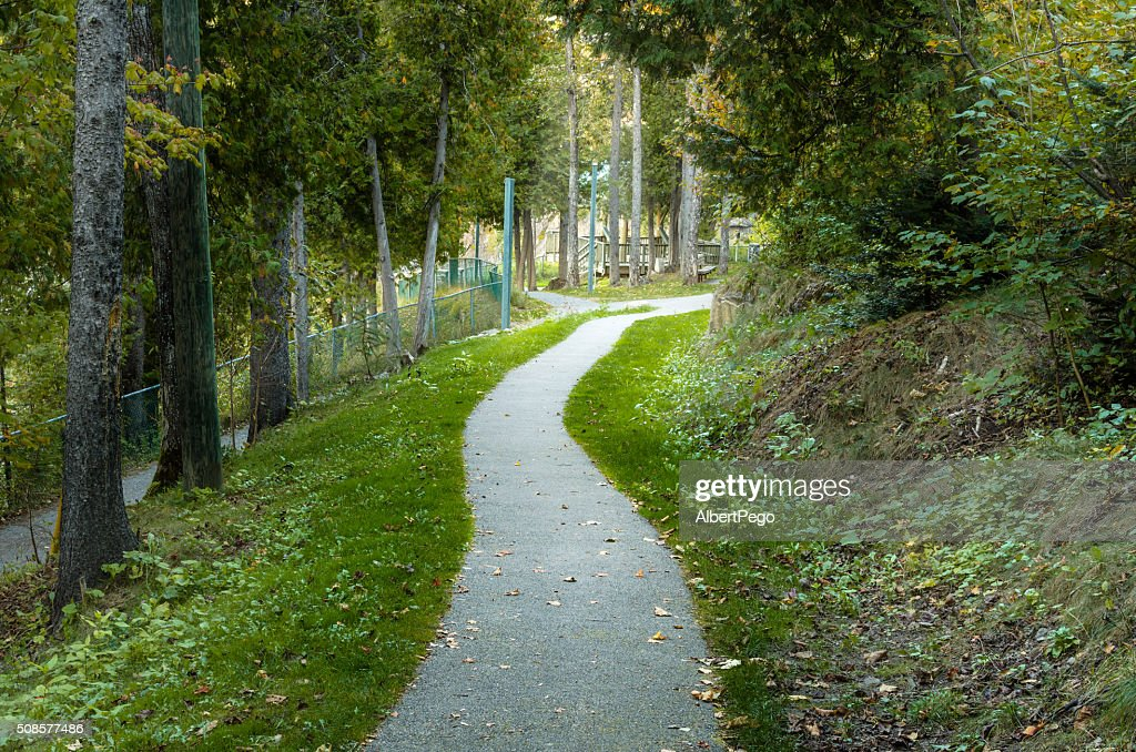 Deserted Forest Path : Stock Photo