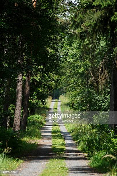 Deserted forest path through a conifer forest on July 16 in HermsdorfKlosterlausnitz Germany