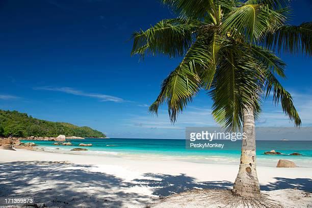 Einsamen tropischen Insel Traum Strand mit Palmen