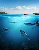 Underwater. Beautiful sea between the green islands