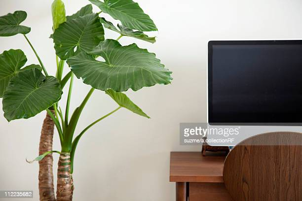 Desk and Houseplant