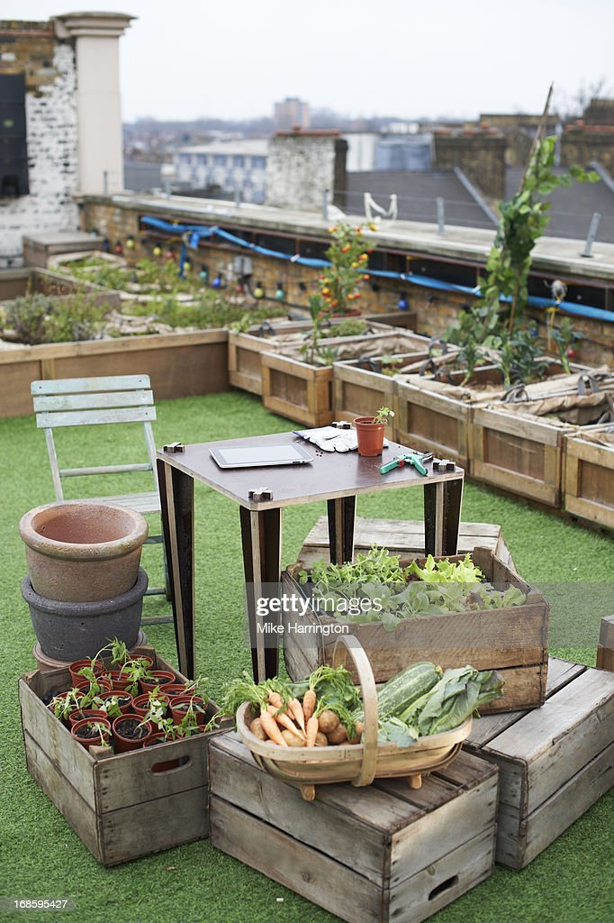 Desk in urban roof garden surrounded by plants. : Stock Photo