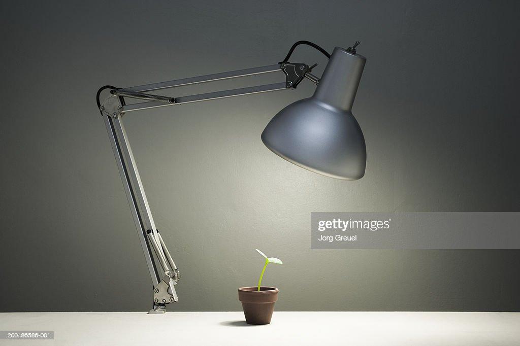 Desk lamp shining on pot plant : Stock Photo