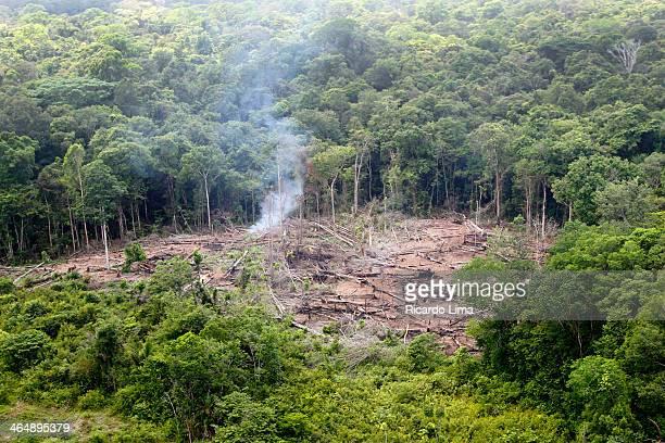 Desmatamento floresta amazônica