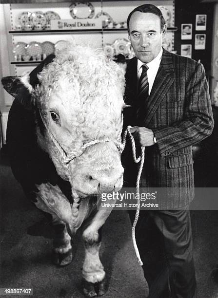 Desmond Morris with a live bull in a china shop in Bristol for BBC TV programme Beasts of the Field 1989