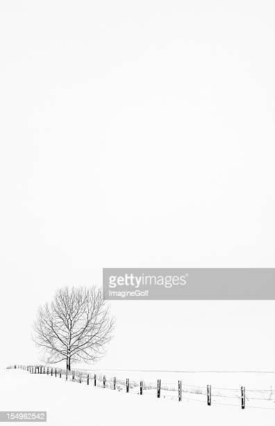 Invierno en la pradera