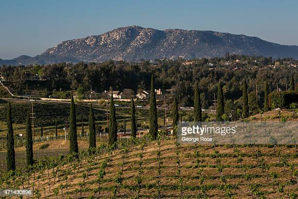 Despite being located on the edge of a desert dozens of wine producers have created an oasis of grapevines and hospitality centers as viewed on March...