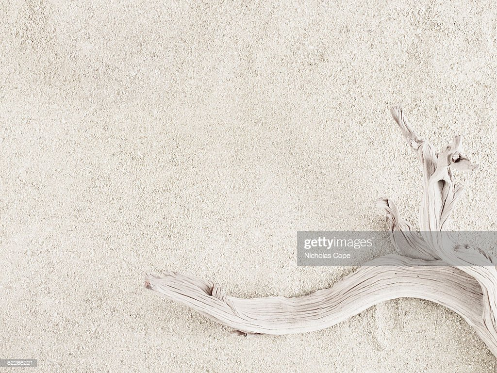 Dessicated plant on sand : Stock Photo