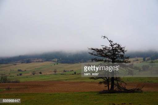 destroyed tree in fog : Stock Photo