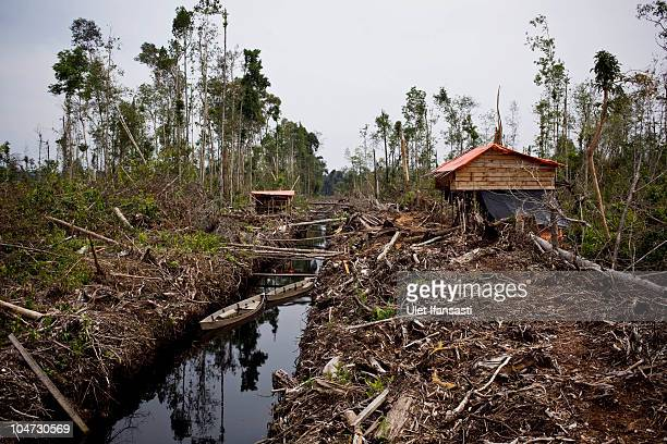 PROVINCE SUMATRA INDONESIA OCTOBER 03 Destruction from a tropical rain forest surrounds Camp of illegal logger in Kuala Cenaku on October 3 2010 in...