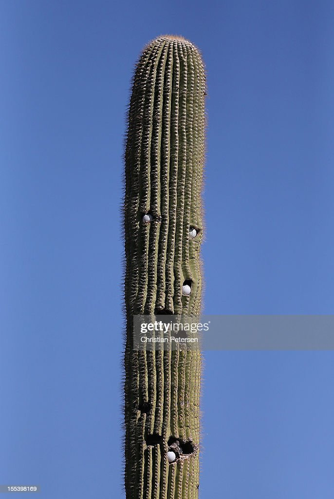Detail of a cactus with golf balls embedded off the 10th hole tee box during the third round of the Charles Schwab Cup Championship on the Cochise Course at The Desert Mountain Club on November 3, 2012 in Scottsdale, Arizona.