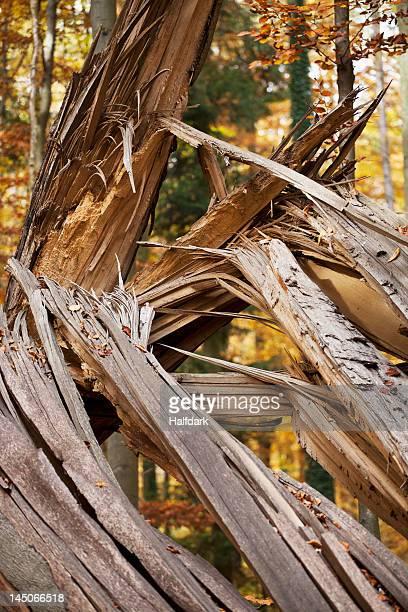 Detail of a fallen tree