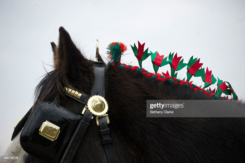 Detail of a horse's dressage before the horse parade on April 1, 2013 in Ardingly, United Kingdom. The Parade is an amalgamation of two traditional parades, the London Cart Horse Parade, founded in 1885 and the London Van Horse Parade, founded in 1904. The objectives of these parades was to improve the general condition and treatment of London's working horses and to encourage drivers to take a humane interest in the welfare of their animals. There is a wide variety of breeds of animal ranging from donkeys to Dutch Friesians and Gelderlander's, to magnificent heavy horses.