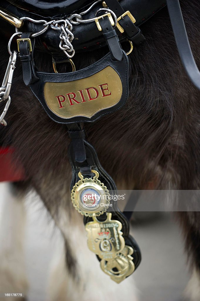 Detail of a horse's name on it's saddle before the horse parade on April 1, 2013 in Ardingly, United Kingdom. The Parade is an amalgamation of two traditional parades, the London Cart Horse Parade, founded in 1885 and the London Van Horse Parade, founded in 1904. The objectives of these parades was to improve the general condition and treatment of London's working horses and to encourage drivers to take a humane interest in the welfare of their animals. There is a wide variety of breeds of animal ranging from donkeys to Dutch Friesians and Gelderlander's, to magnificent heavy horses.