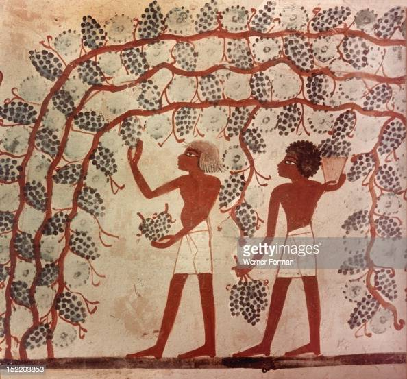 A detail of a painting from the tomb of Nakht depicting the gathering of grapes from an arbour Egypt Ancient Egyptian 18th dynasty c 1421 1413BC Tomb...