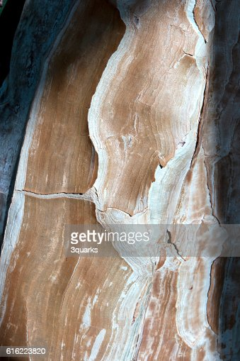Detail of a tree bark : Stock-Foto