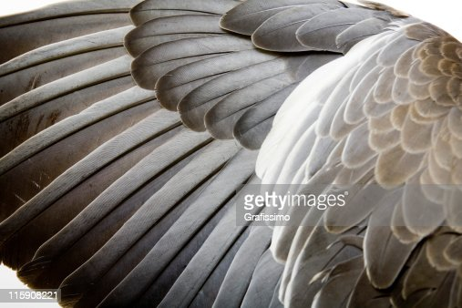 Detail of a wing