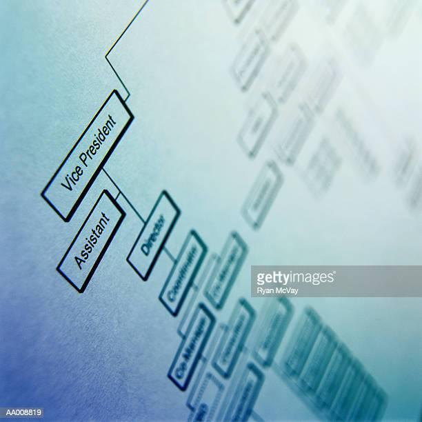 Detail of an Organizational Chart