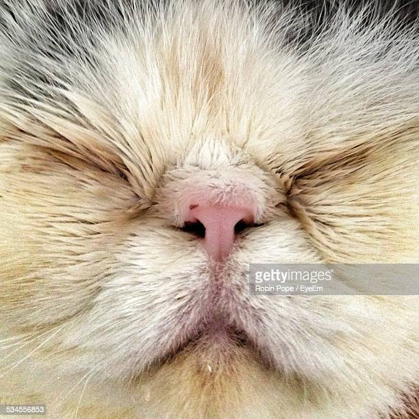 Detail Of Cat Nose