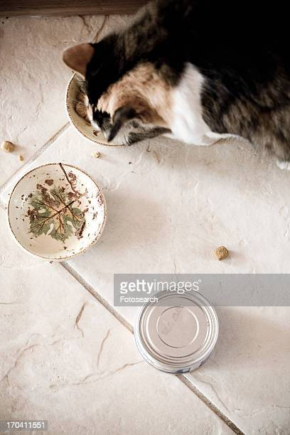 Detail of cat with food dishes and a can of cat food