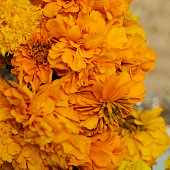 Detail of the traditional flower of the day of the dead